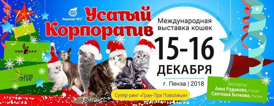 Выставка кошек - Усатый Корпоратив, ЦНТИ